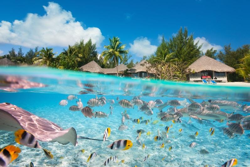 Diving tahiti journey by expert family travel dallas for Bora bora fish
